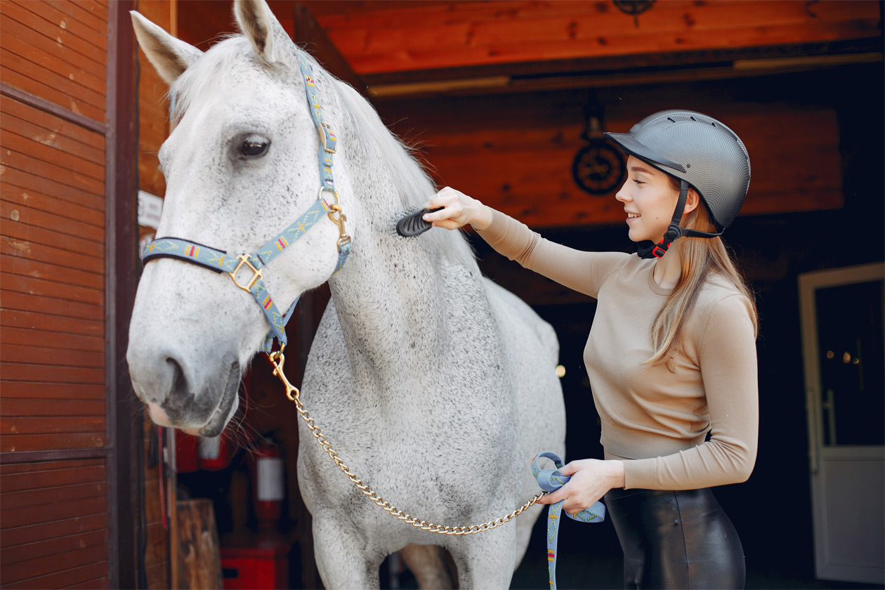 Basic horse care tips