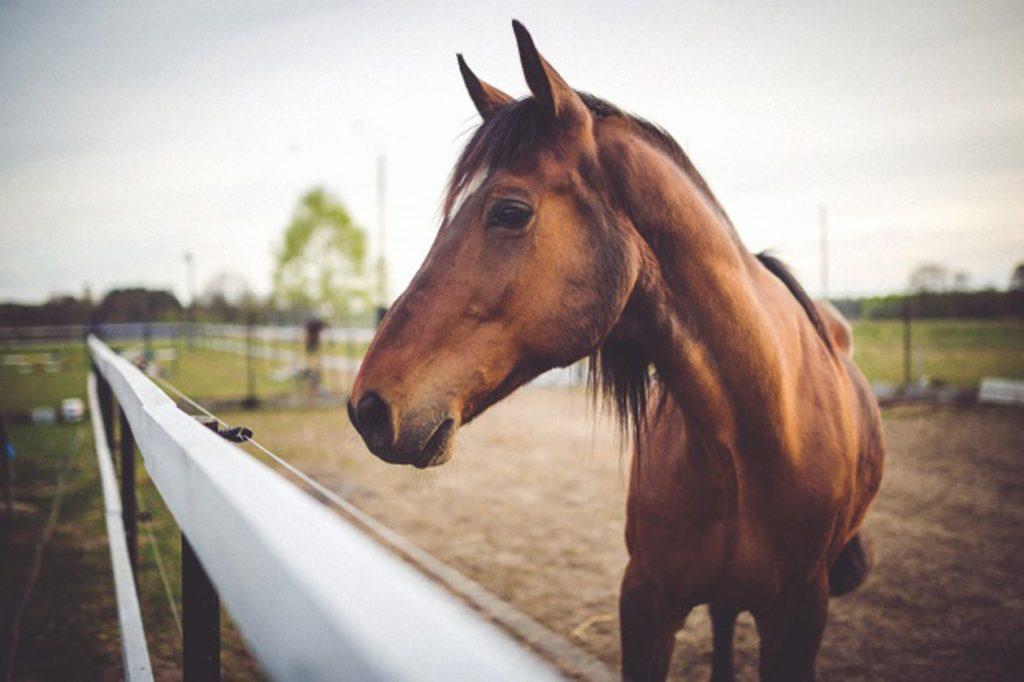 Horse Care